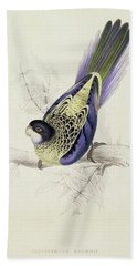Platycercus Brownii, Or Browns Parakeet Beach Towel by Edward Lear