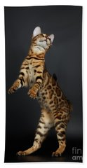 Playful Female Bengal Cat Stands On Rear Legs Beach Sheet by Sergey Taran
