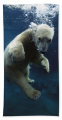Polar Bear Ursus Maritimus Cub Beach Sheet by San Diego Zoo