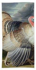 Portrait Of A Turkey  Beach Towel by Johann Wenceslaus Peter Wenzal