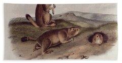 Prairie Dog Beach Towel by John James Audubon