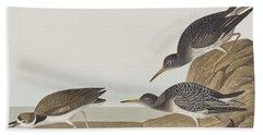 Purple Sandpiper Beach Sheet by John James Audubon