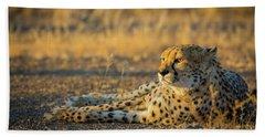 Reclining Cheetah Beach Sheet by Inge Johnsson