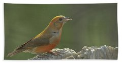 Red Crossbill Beach Towel by Constance Puttkemery