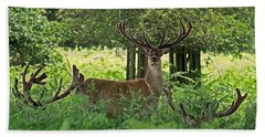 Red Deer Stag Beach Sheet by Rona Black