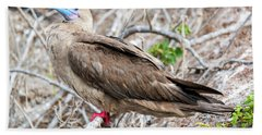 Red Footed Booby Beach Sheet by Jess Kraft