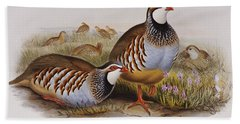 Red-legged Partridges Beach Towel by John Gould