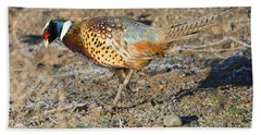 Ring-necked Pheasant Rooster Beach Towel by Mike Dawson