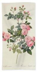 Rosa Multiflora Carnea Beach Sheet by Pierre Joseph Redoute