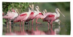 Roseate Spoonbill Flock Wading In Pond Beach Towel by Tim Fitzharris