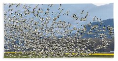 Snow Geese Exodus Beach Sheet by Mike Dawson