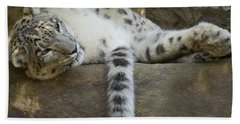 Snow Leopard Nap Beach Sheet by Mike  Dawson