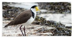Southern Masked Lapwing Beach Towel by Nicholas Blackwell