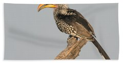 Southern Yellow-billed Hornbill Tockus Beach Towel by Panoramic Images