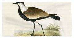 Spur Winged Plover Beach Towel by English School