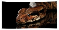 The Boa Constrictors, Isolated On Black Background Beach Towel by Sergey Taran