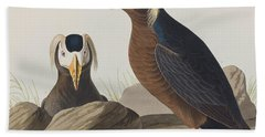 Tufted Auk Beach Sheet by John James Audubon