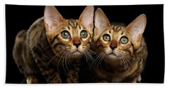 Two Bengal Kitty Looking In Camera On Black Beach Sheet by Sergey Taran