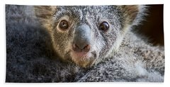 Up Close Koala Joey Beach Sheet by Jamie Pham