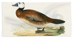 White Headed Duck Beach Towel by English School