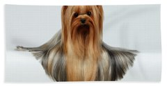 Yorkshire Terrier Dog With Long Groomed Hair Lying On White  Beach Sheet by Sergey Taran