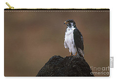 Augur Buzzard Carry-all Pouch by Art Wolfe