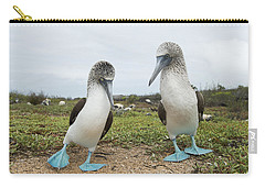 Blue-footed Booby Pair Courting Carry-all Pouch by Tui De Roy