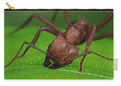 Leafcutter Ant Cutting Papaya Leaf Carry-all Pouch by Mark Moffett