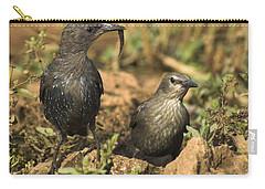 Starling Estornino Carry-all Pouch by Guido Montanes Castillo