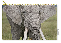 African Elephant Loxodonta Africana Carry-all Pouch by Panoramic Images
