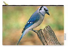 Blue Jay Carry-all Pouch by Millard H. Sharp