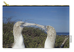 Blue-footed Boobies Courting Galapagos Carry-all Pouch by Tui De Roy