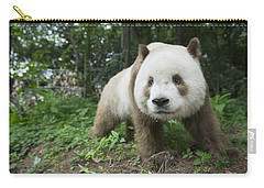 Giant Panda Brown Morph China Carry-all Pouch by Katherine Feng