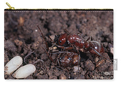 Ant Queen Fight Carry-all Pouch by Gregory G. Dimijian, M.D.
