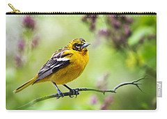 Baltimore Oriole II Carry-all Pouch by Christina Rollo