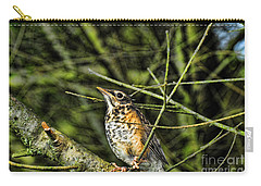 Bird - Baby Robin Carry-all Pouch by Paul Ward
