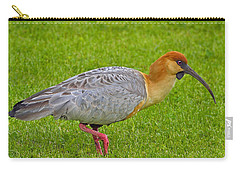 Black-faced Ibis Carry-all Pouch by Tony Beck