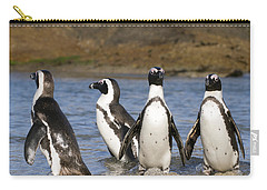 Black-footed Penguins On Beach Cape Carry-all Pouch by Alexander Koenders