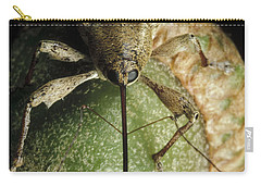 Black Oak Acorn Weevil On Acorn Carry-all Pouch by Mark Moffett