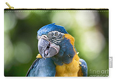 Blue And Gold Macaw V3 Carry-all Pouch by Douglas Barnard