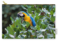 Blue And Yellow Macaw Carry-all Pouch by Art Wolfe