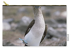 Blue-footed Booby In Courtship Dance Carry-all Pouch by Konrad Wothe