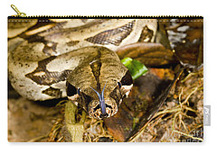 Boa Constrictor Carry-all Pouch by Gregory G. Dimijian, M.D.