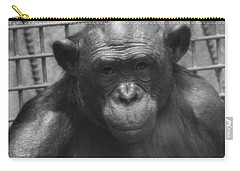 Bonobo Carry-all Pouch by Dan Sproul