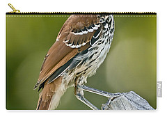 Brown Thrasher Carry-all Pouch by Robert Frederick