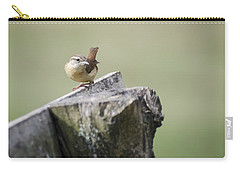Carolina Wren Carry-all Pouch by Heather Applegate
