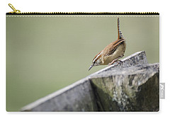 Carolina Wren Two Carry-all Pouch by Heather Applegate