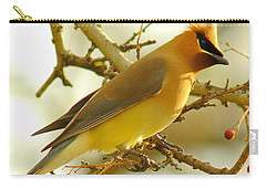 Cedar Waxwing Carry-all Pouch by Robert Frederick