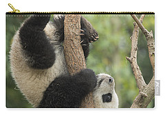 Giant Panda Cub In Tree Chengdu Sichuan Carry-all Pouch by Katherine Feng
