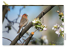 House Finch Carry-all Pouch by Mike Dawson